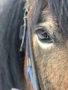 Vackra hästögon